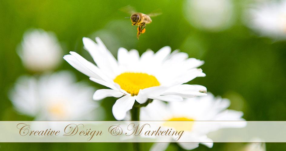 creative design and marketing